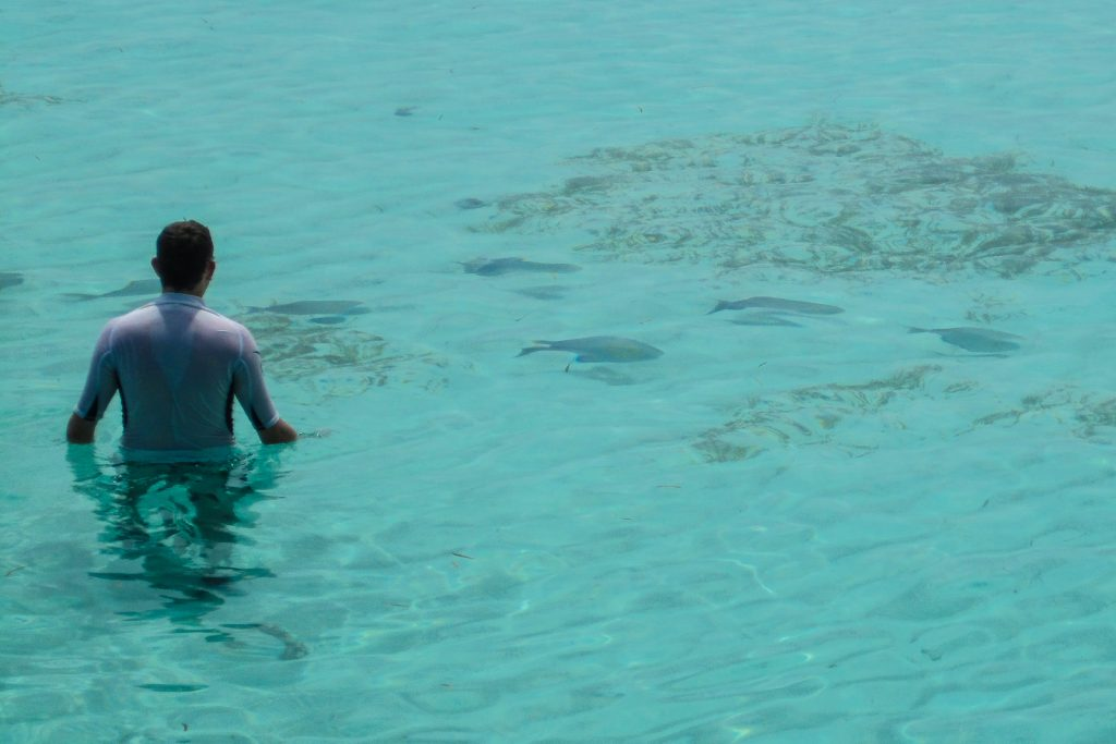 Swimming in the Maldives Resorts with fish in the sea.