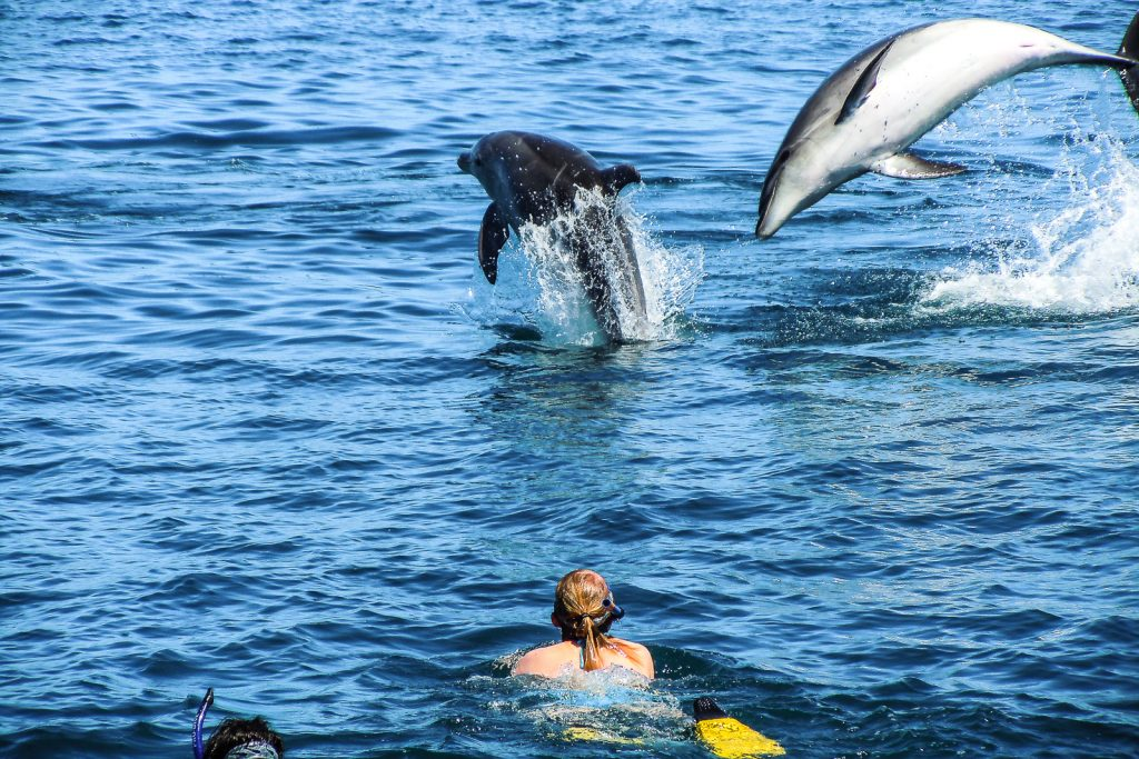 Swimming with Dolphins, with Carino in the Bay of ISlands, North Island New Zealand