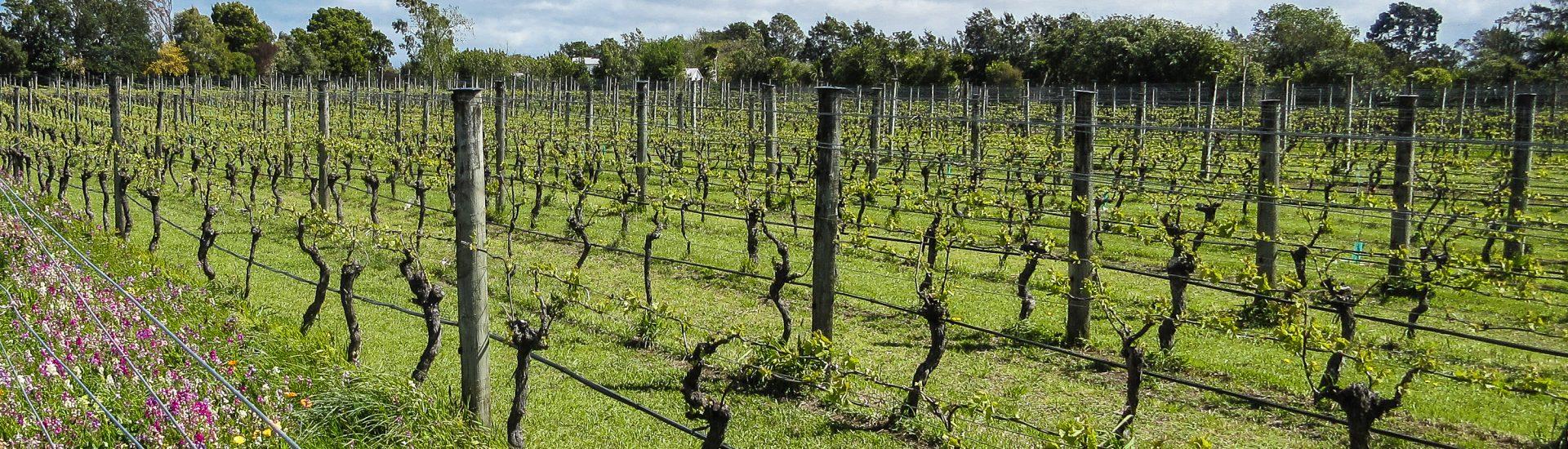 Martinborough Wineries, sauvignon blanc, New Zealand WIne