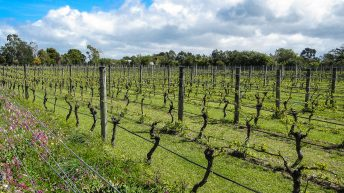 Martinborough Wineries, sauvignon blanc, New Zealand WIne