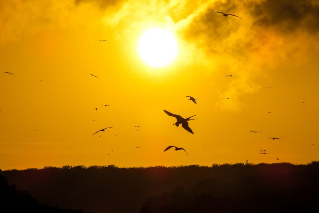 Sunset over Genovesa Island as frigatebirds fly above at Darwin Beach. Isla Genovesa is a volcanic caldera which can be sailed to on a Galapagos Cruise.