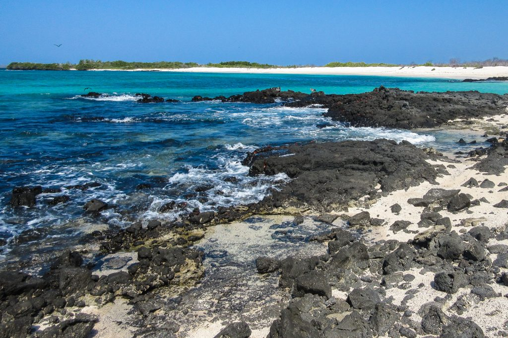 Las Bachas beach on the north shore of Isla Santa Cruz in the Galapagos Islands is a habitat for iguanas, sally lightfoot crabs, and flamingos in a salt water lagoon. Isla Santa Cruz can be visited on a galapagos cruz from Ecuador.
