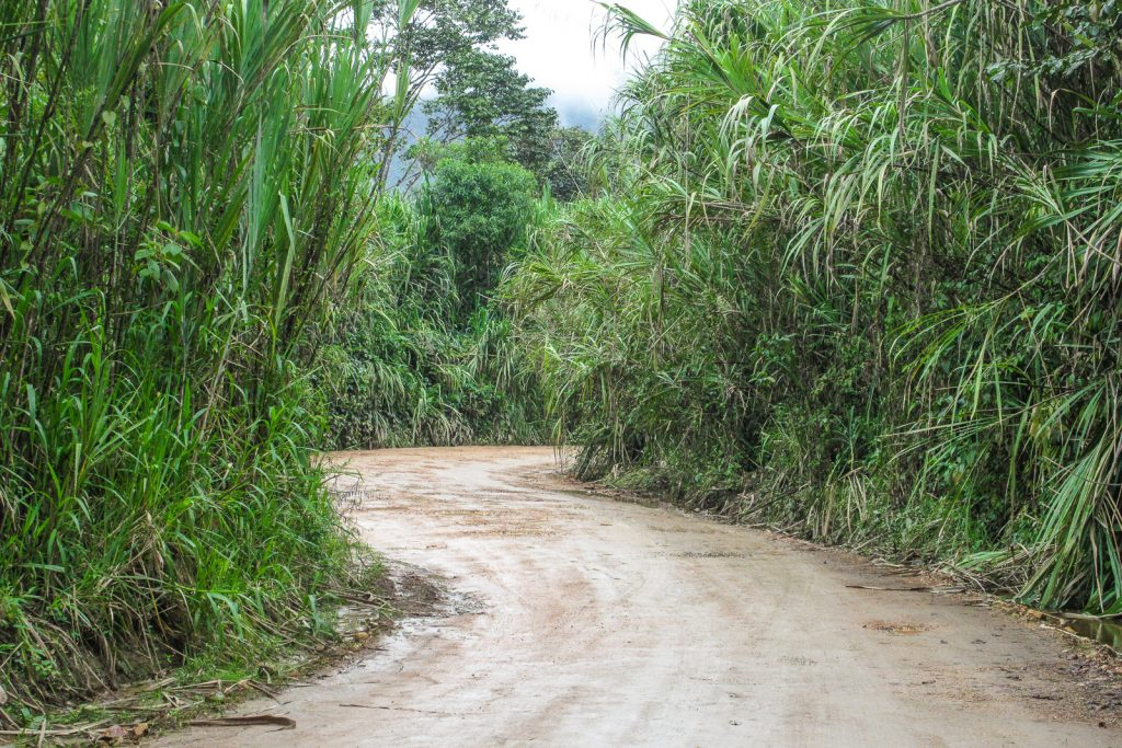 A road meanders through green rainforest in Mindo Ecuador