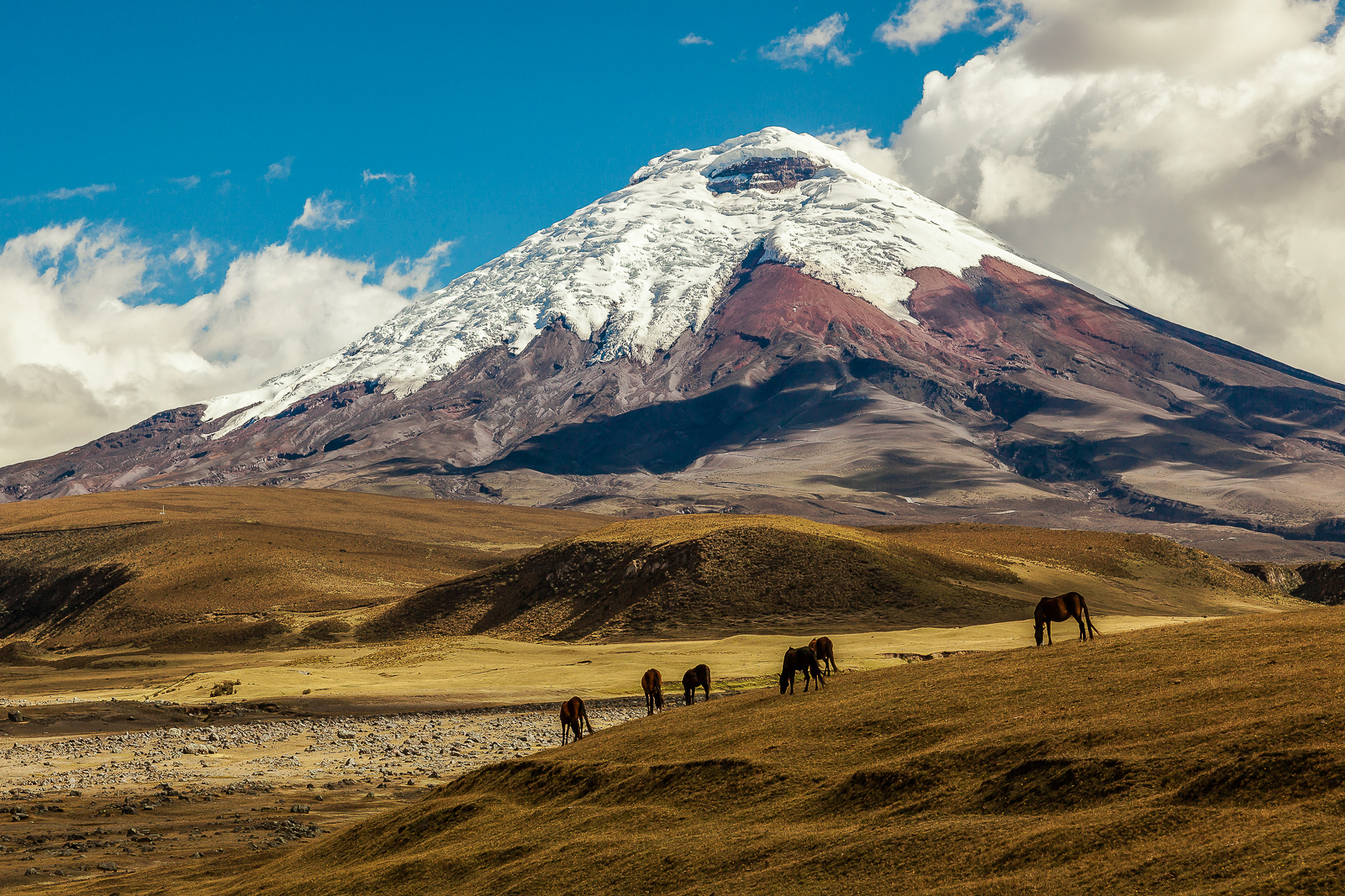 Things to do in Ecuador: visit the Cotopaxi National Park, Cotopaxi, an active volcano, at sunset with horses in the foreground