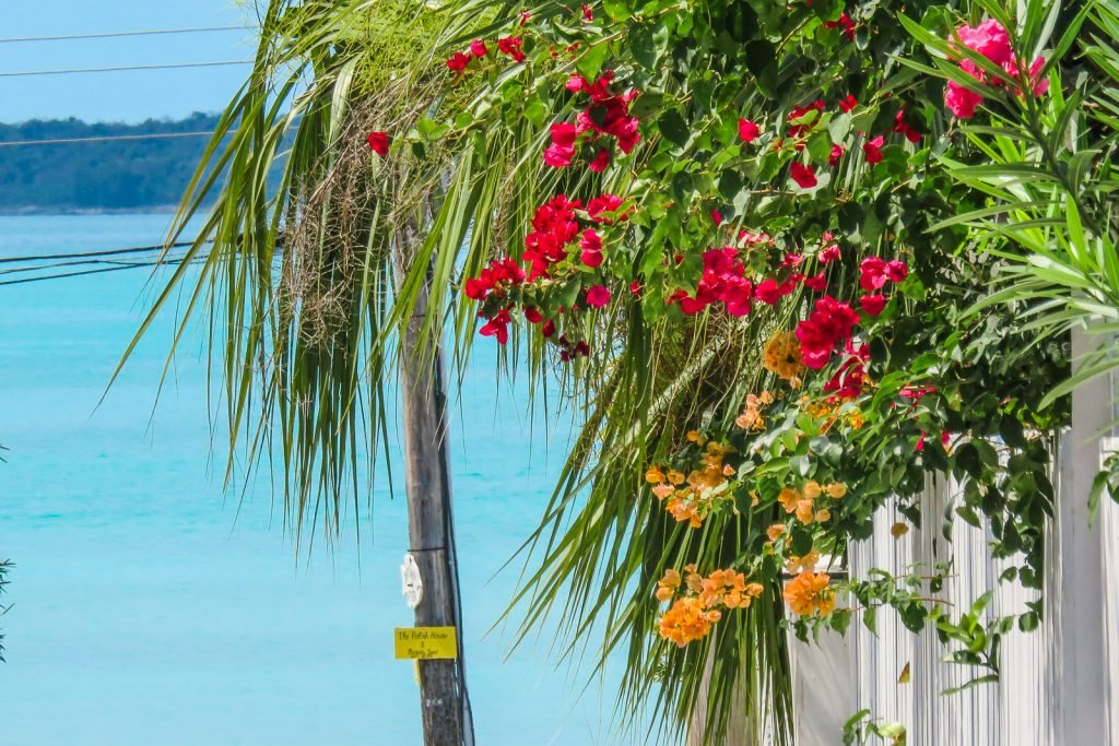 Flowers bloom in Dunmore Town on Harbour Island Bahamas in North Eleuthra. Flights to North Eleuthra depart from Florida with Bahamas Air Tours.