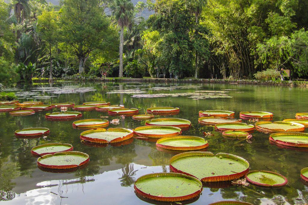 Jardim Botanico; The Botanic Gardens Rio de Janeiro are one of the top things to do in Rio de Janeiro