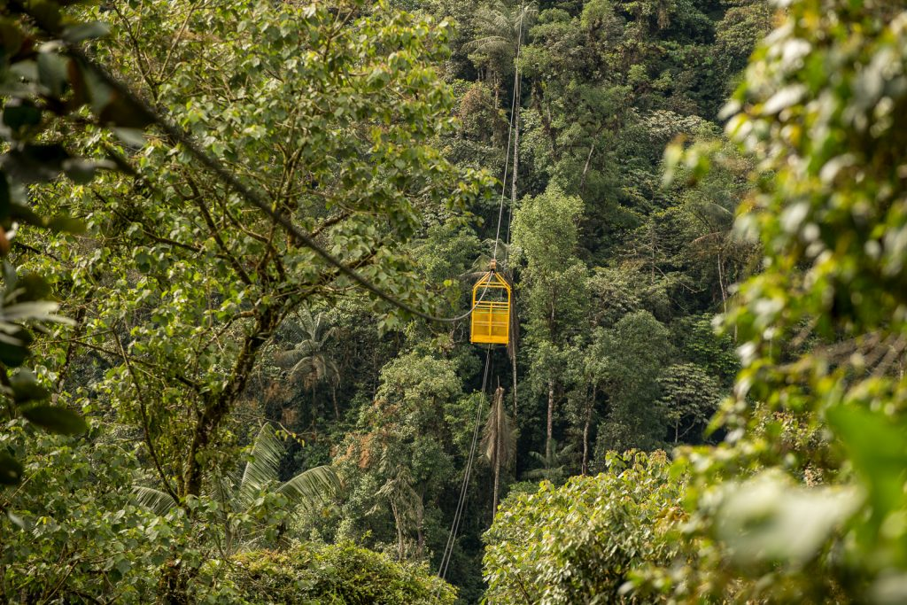 Mindo Cloud Forest Ecuador; The tropical rainforest of Mindo in Ecuador is full of diversity and life. Plants and animals surround you and you can discover unspoiled beauty of South American nature
