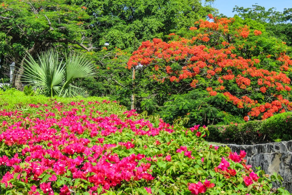 Flowers bloom in the downtown area of Nassau Bahamas. Things to do in Nassau Bahamas