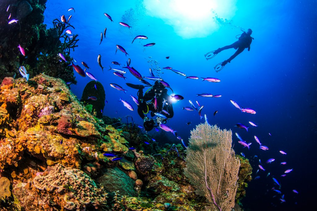 Things to do in Bahamas Scuba Diving