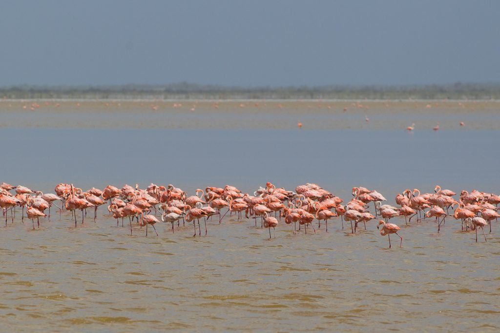 Things to do in Bahamas Inagua Island, Flamingos