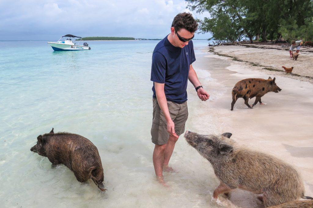How to visit the Swimming Pigs Bahamas and Exuma Pigs Tour