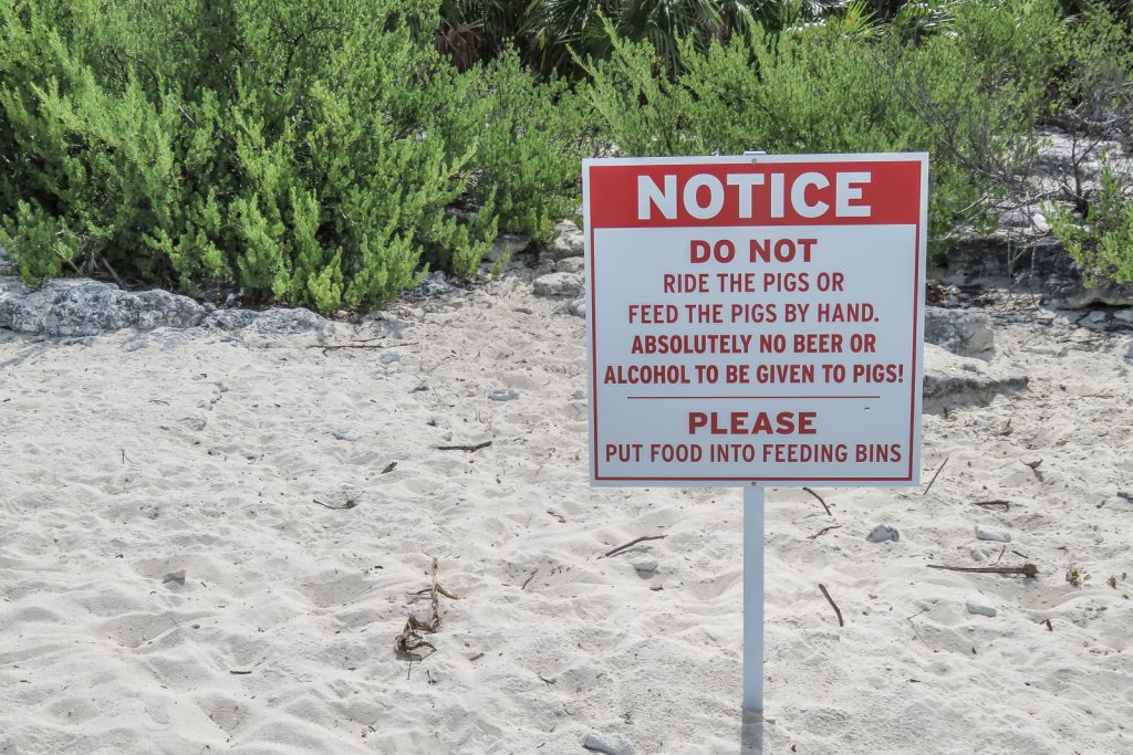 Exuma pigs on pig beach, pig island, Big Major Cay at Staniel Cay in the Exumas Bahamas. Warning signs.