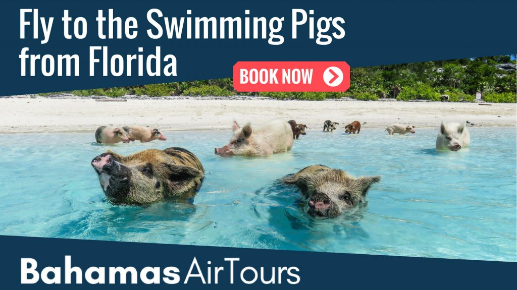Swim with the Exuma Pigs at Staniel cay Bahamas with our unique Island Hopping Tours of the Bahamas with Bahamas Air Tours