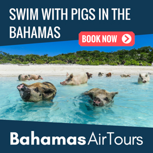 flights-to-bahamas-exuma-pigs.jpg