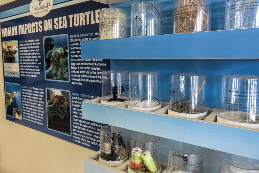 Loggerhead Marine Life Center Turtle hospital.