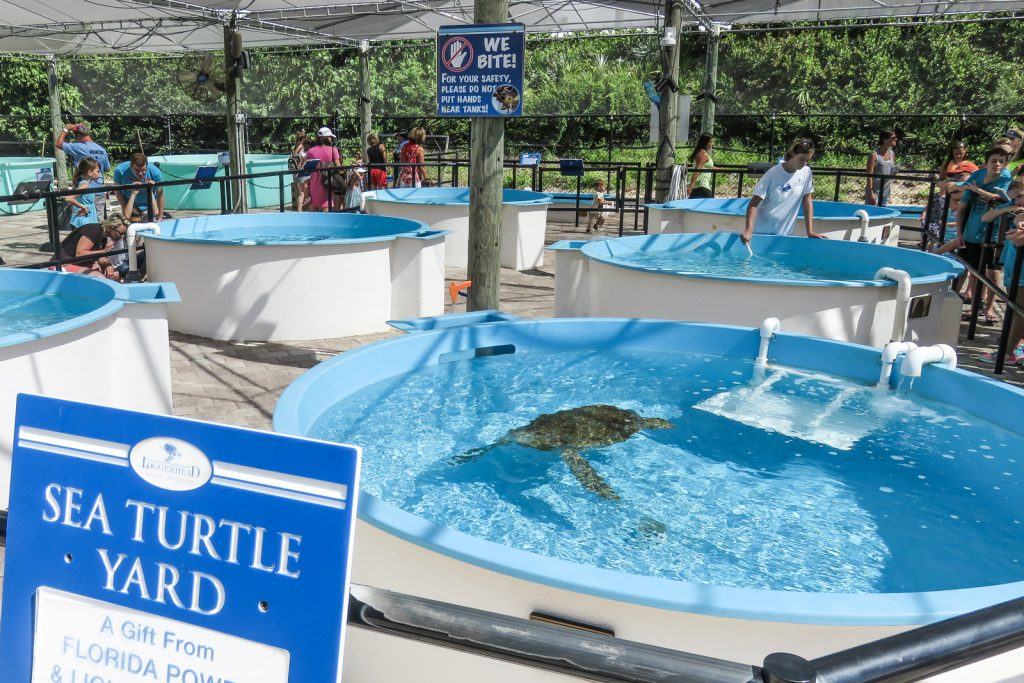 Rehabilitation Center. Things to do in West Palm Beach, Loggerhead Marine Life Center