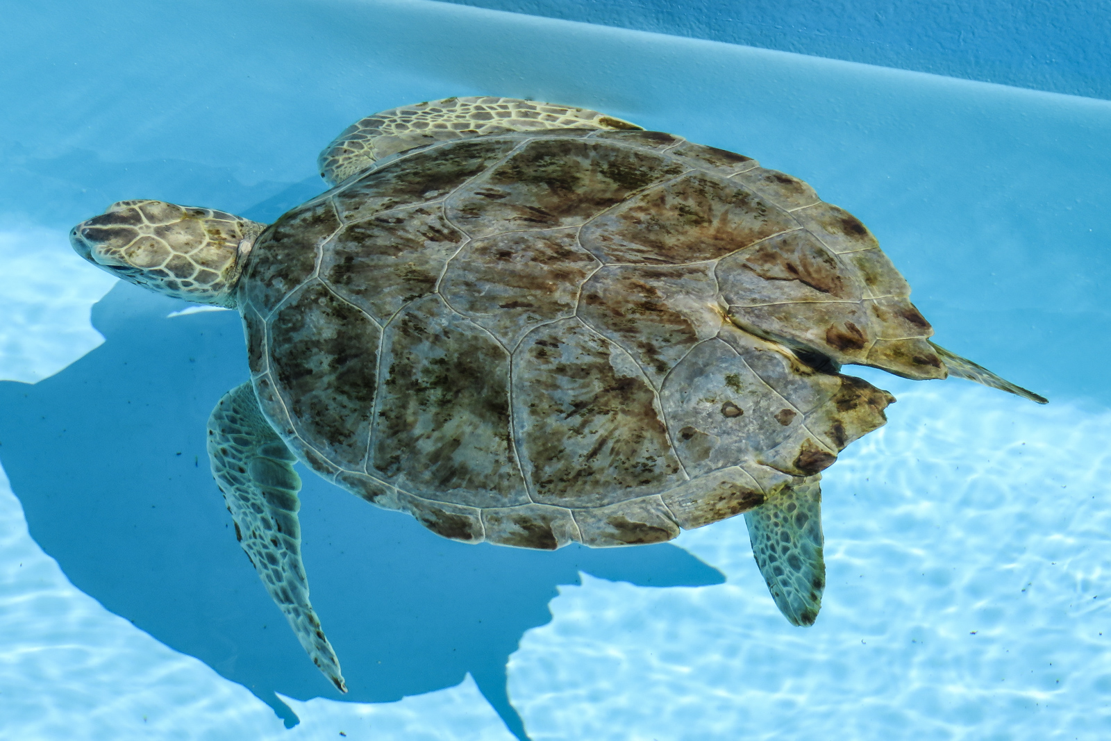 Things to do in West Palm Beach, Loggerhead Marine Life Center