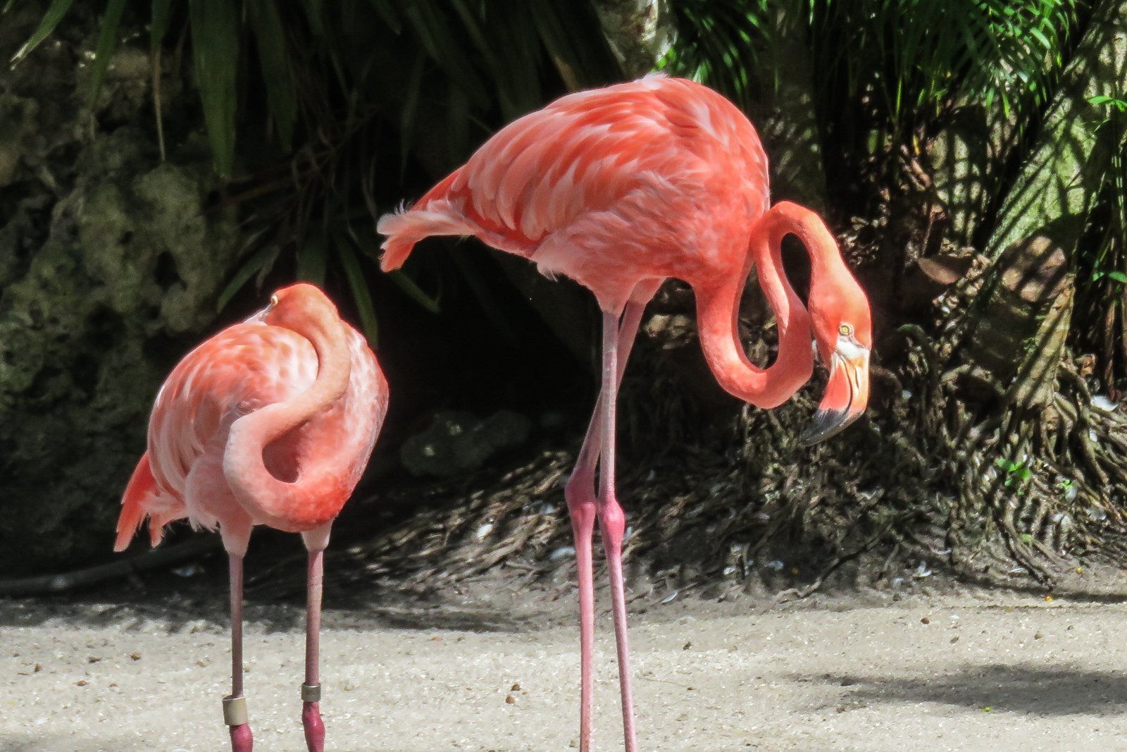 Top things to do in Fort Lauderdale Flamingo Gardens. Discover the wonders of nature in the parks, gardens and everglades surrounding Fort Lauderdale.