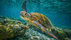 Visit the Loggerhead Marine life center in Florida