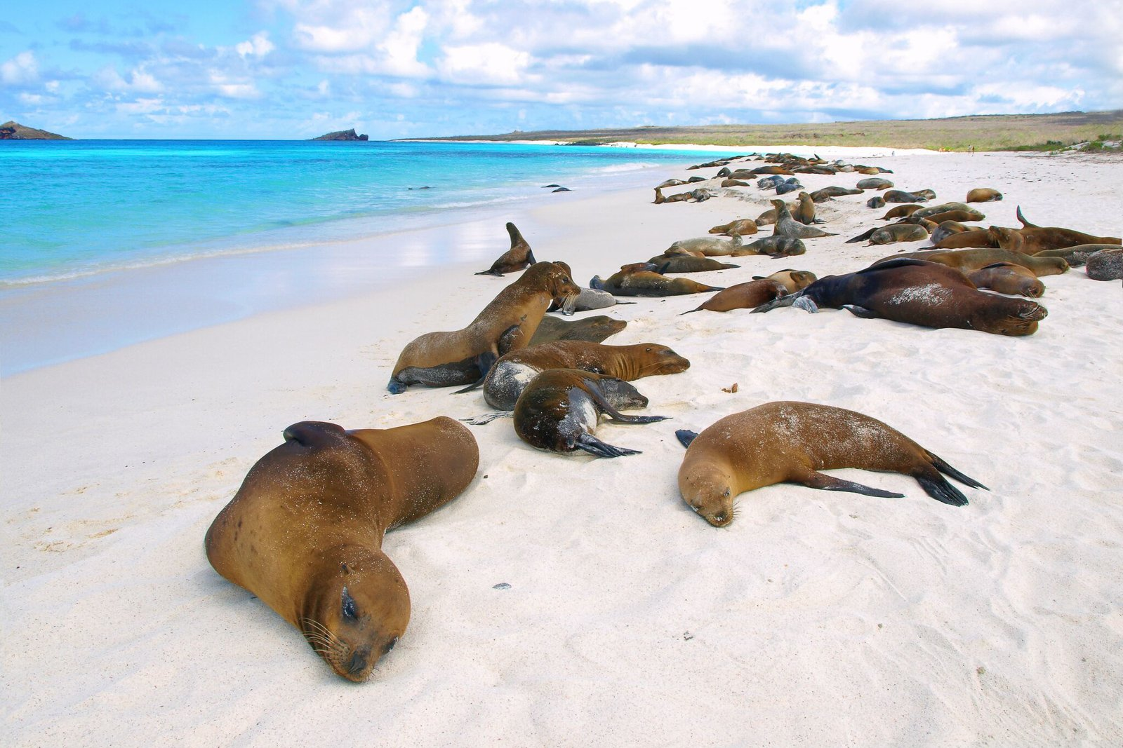 Galapagos Islands Cruise Sea lions