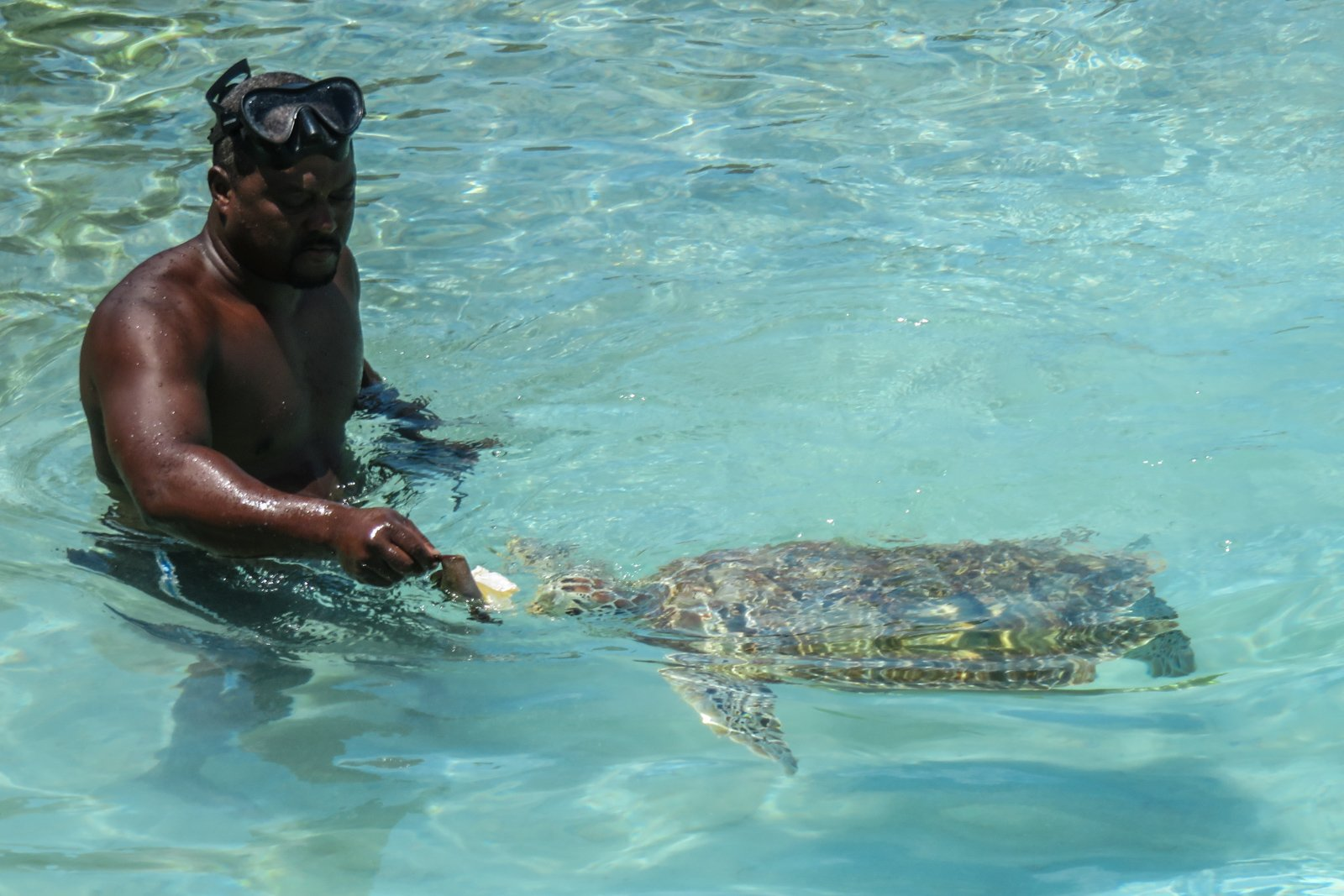 Day Trips from Miami to Staniel Cay to swim with the Turtles at Farmers Cay