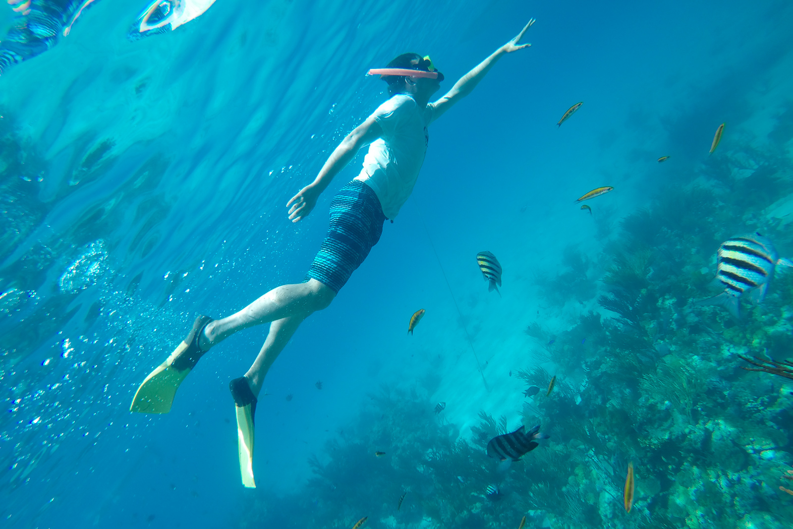 Snorkelling into Thunderball Grotto on a One Day Cruise from Miami to Bahamas by Plane at Staniel Cay with Bahamas Air Tours