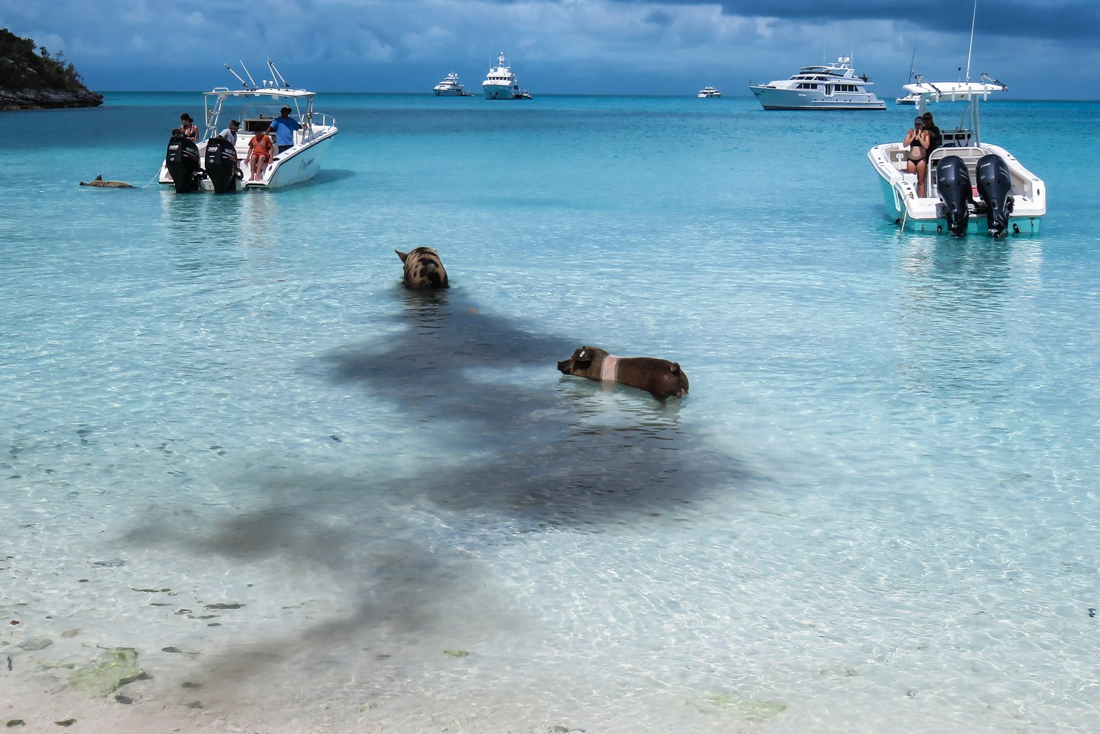 Pig Beach Exuma Bahamas Air Tours day trips and island hopping tours to Pig Island