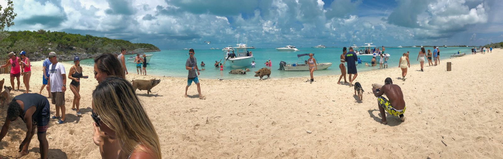 Pig Beach Bahamas: Guide to visiting the Bahamas Swimming Pigs