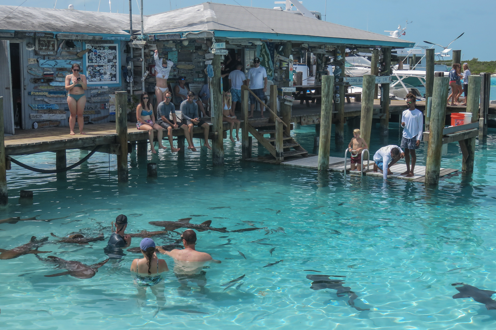 Staniel Cay Sharks Compass Cay day trip to Bahamas with Bahamas Air Tours