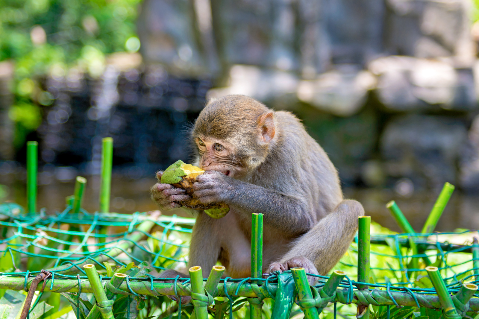 Monkey Jungle is one of the best tourist attractions in Miami Florida. Monkeys, small and big, plays and bask in the Sun. Monkey Island. Your guide for all the top Miami attractions and best things to do in Miami. There are Plenty of tourist attractions in Miami Florida. This Guide presented by Flying and Travel.