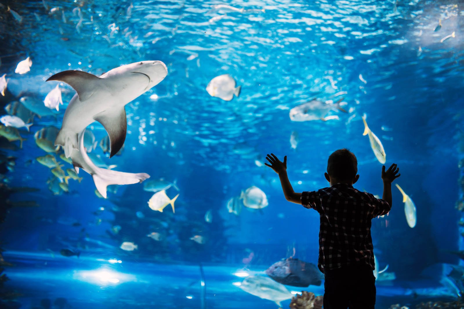 The Oceanarium at Atlantis Hotel Bahamas is one of our favorie things to do in Atlantis Paradise Island. Read more Atlantis Bahamas travel tips before traveling there.