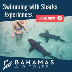bahamas-swimming-with-sharks-tours.jpg