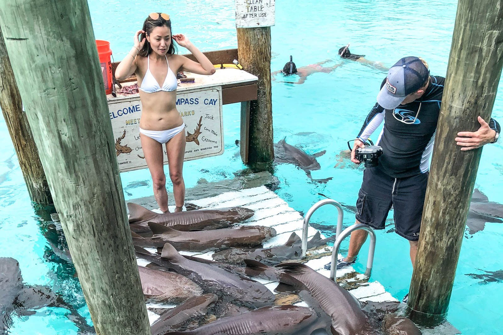 The Compass Cay Bahamas sharks are a crowd favorite among Bahamas day trip-goers.