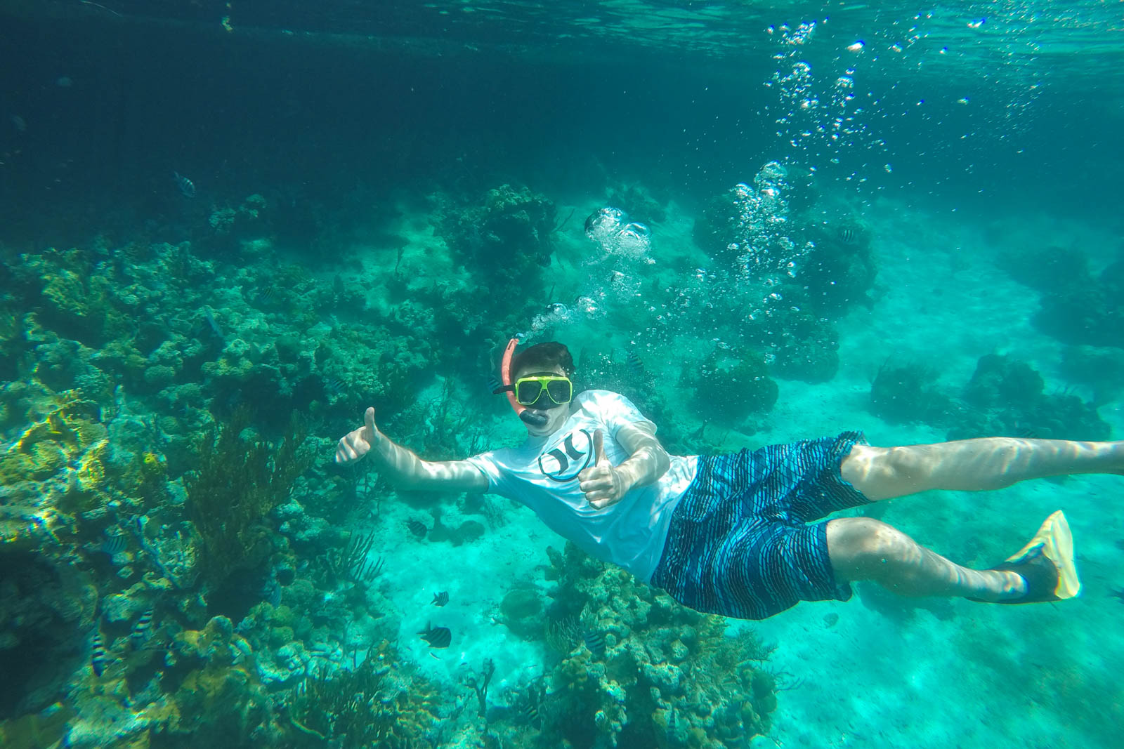 Go snorkeling on your Fort Lauderdale to Bahamas day trip. There is plenty to discover on your day trip to Bahamas from Fort Lauderdale.