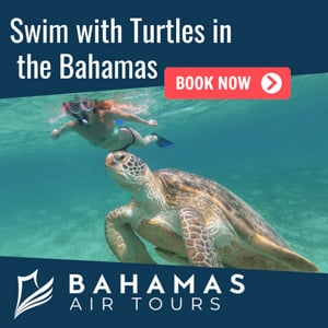 swimming-turtles-bahamas-tours.jpg