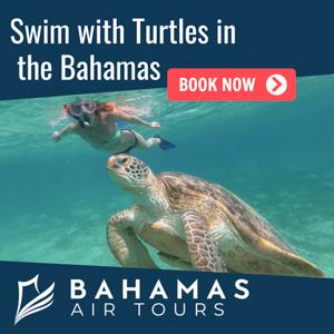 swimming-turtles-bahamas-tours.jpg