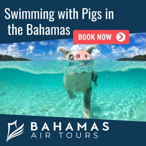 swimming-with-pigs-bahamas-tour.jpg