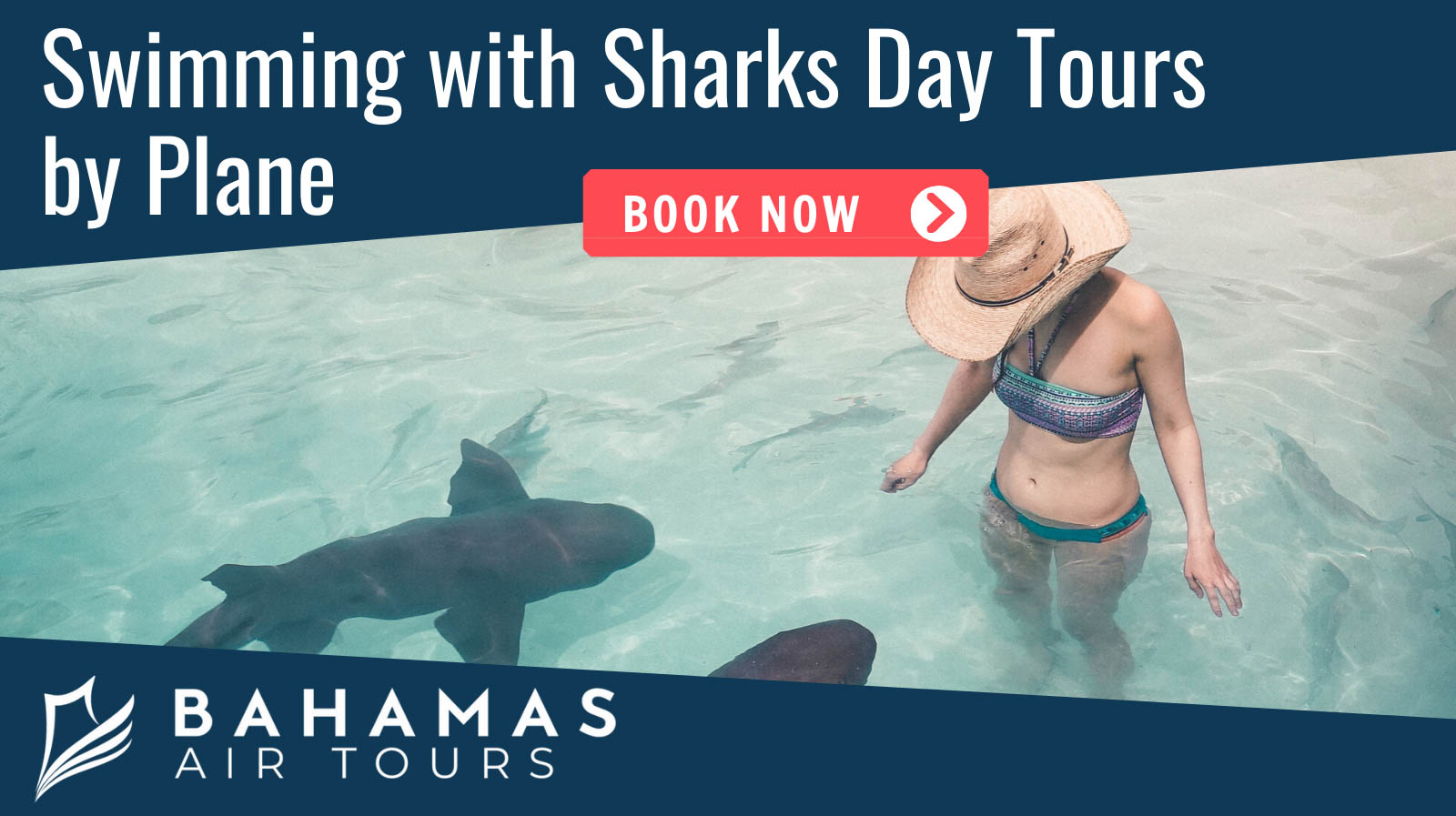 Swimming with Sharks at Bahamas Air Tours at Compass Cay on a Staniel Cay Tour of Exuma by plane. Nassau to Exuma Day Trips.