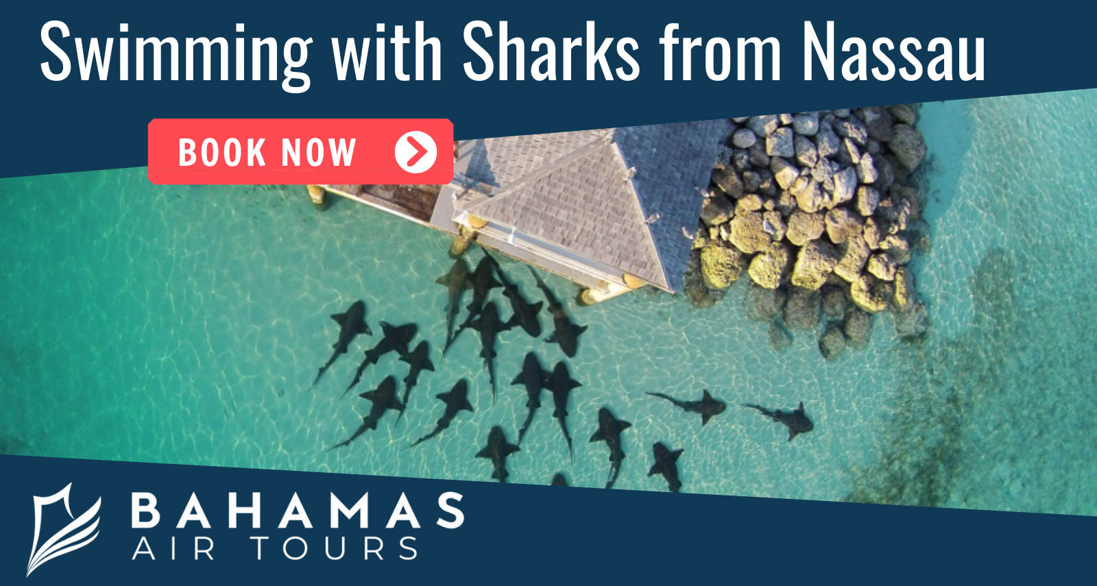 Swimming with sharks experience with Bahamas Air Tours. Bahamas day trips by plane.