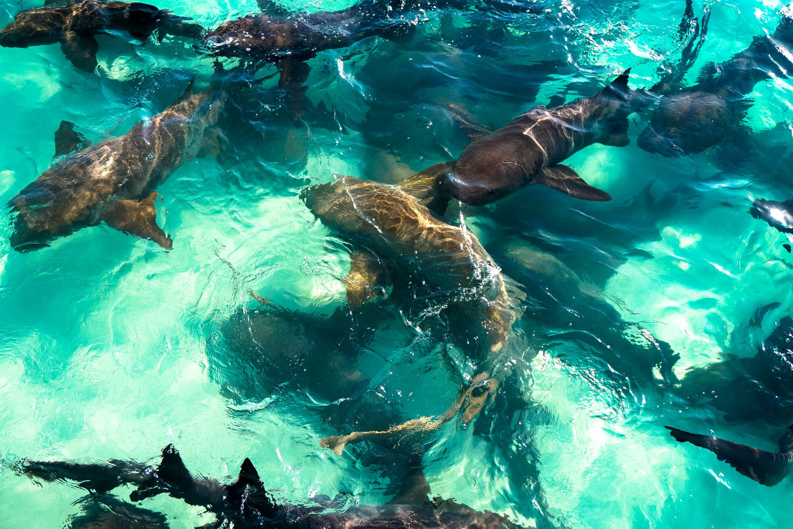 A Bahamas day trip is among the many things to do in Florida this weekend. Swim with Sharks at Compass Cay and see one of the besst things to do in Florida vacation.
