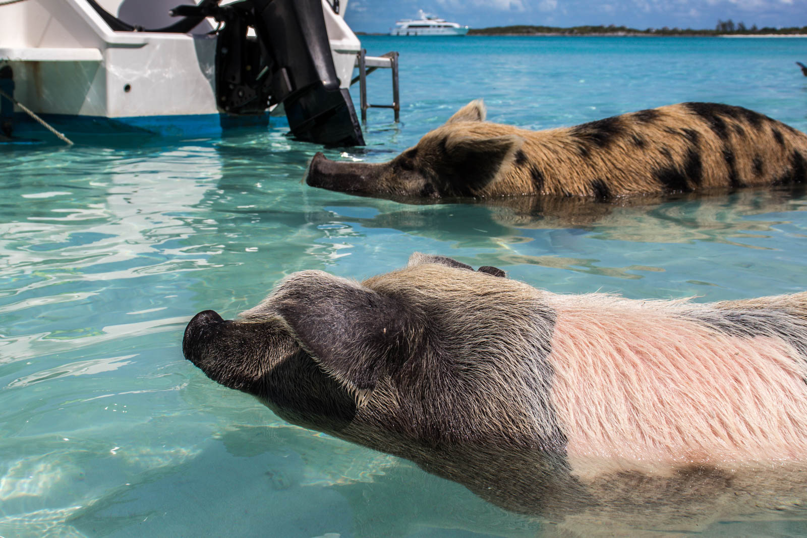 The Bahamas swimming pigs are always a good idea for a family excursion! Wondering what to do in Nassau cruise port? Take off on a Bahamas day trip to Exuma Cays.
