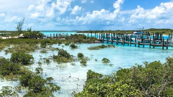 Visit Compass Cay on a number of Bahamas day trips. The Compass Cay Bahamas reef sharks are harmless but can grow to be beasts.
